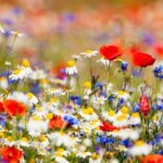 Spring Time & Wild Flower Planting